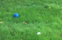 Bocce Balls in Grass